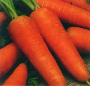 Семена сортовой моркови Курода Новая